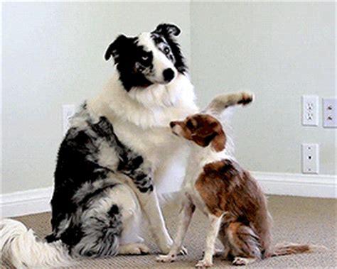 cute dogs hug gif luvbat