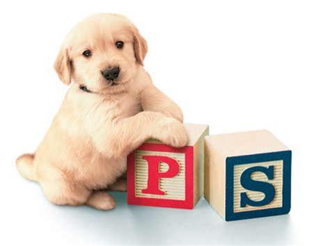 dog training  behavior puppy socialization dog