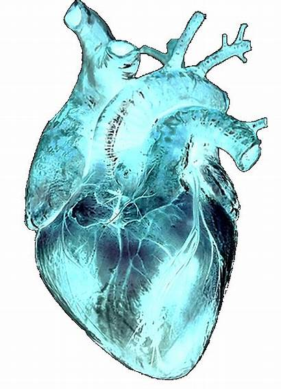 Transparent Heart Beating Sticker Animated Gifs Pulido