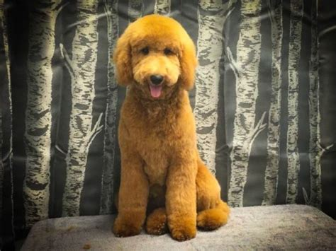 happy holidays wags  riches dog grooming