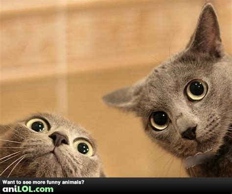 Awkward Cat Meme - 7 goofy cats that don t belong on this planet