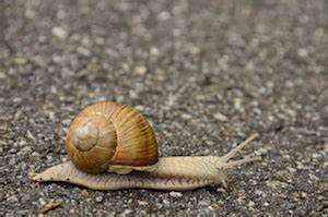 Schnecken Mit Haus : wie kommt die schnecke zu ihrem haus hallimasch mollymauk ~ Lizthompson.info Haus und Dekorationen