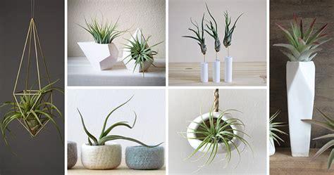 petit pot de fleur exhiber ses plantes aeriennes avec