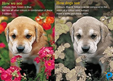 are all dogs color blind how animals see the world vision cat vision more