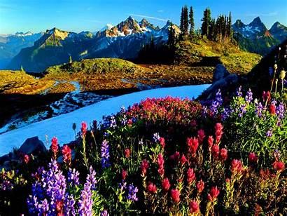 Scenery Spring Desktop Background Wallpapers Flower Landscape