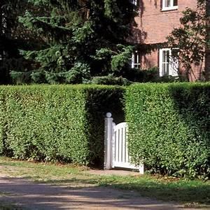 Schnell Wachsender Sichtschutz Immergrün : best 25 hecke schneiden ideas on pinterest ~ Michelbontemps.com Haus und Dekorationen
