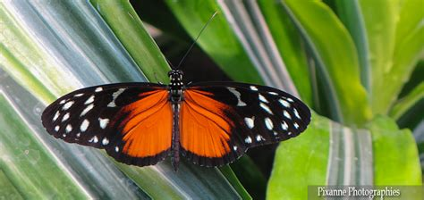 cuisine kehl les jardins des papillons hunawihr