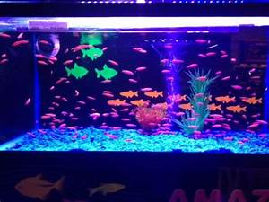 8 best images about Glow fish on Pinterest | Glow, Neon ...