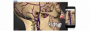 5 Best 3d Anatomy Software For Windows