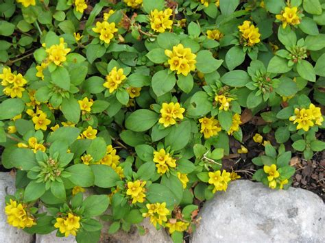 flower ground cover the expressive figures of janet bodin may 2010