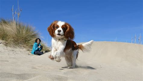 The mspca receives many phone calls from people who are denied homeowner's insurance solely because they own a particular breed of dog. 15 Small Dog Breeds & Hybrids That Are Good For First-Time Pet Parents - DogTime