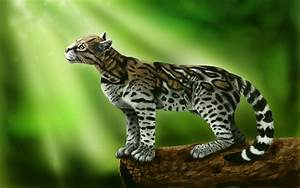 Ocelot cat on a green background wallpapers and images ...