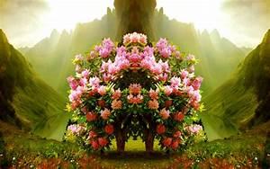 Flowers Nature Pink Tree Full Flowers Wallpaper Flower ...