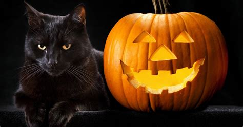 Black Cats Halloween Hazards Motivating Myths Cattime