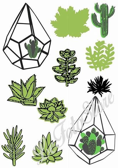 Cricut Succulent Clipart Svg Cactus Cacti Bundle
