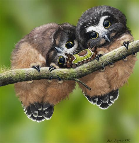 baby owls baby saw whet owls and saddleback caterpillar by psithyrus indulgy popular feed owl babies