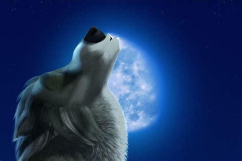 wolf howling   moon wallpaper wallpapertag