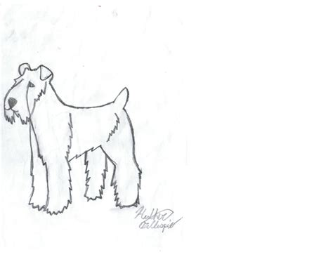 Wheaten Terrier Pages Coloring Pages