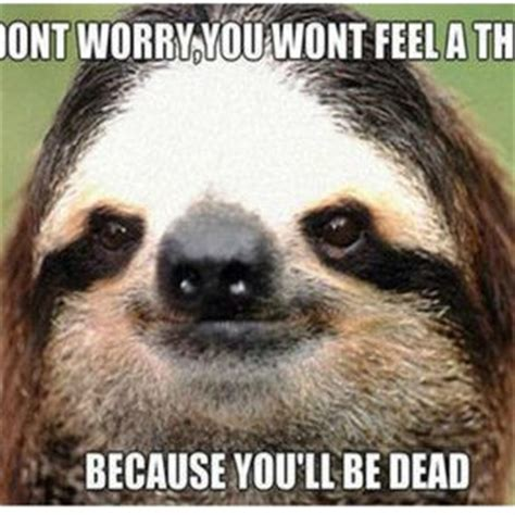 Cute Sloth Meme - positive quotes with cute sloths quotesgram