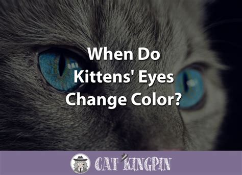 kitten eye color when do kittens change color cat kingpin