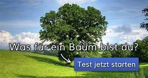 Du Bist Ein Traum : was f r ein baum bist du ~ Orissabook.com Haus und Dekorationen