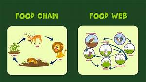Lion Food Chain | www.pixshark.com - Images Galleries With ...