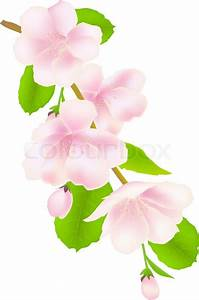 Apple Tree Flower Diagram Wallpapers | Volvoab