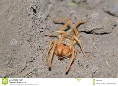 araign馥 dans la chambre araignée de sun fond d insecte d afrique crocs effrayants