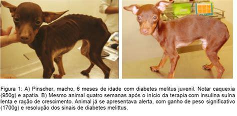 medicina veterinaria animais de companhia diabetes