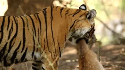 wild animals life full hd documentary youtube