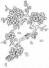Blossom Cherry Tree Coloring Drawing Flower Tattoo Japanese Blossoms Trees Drawings Flowers Step Pages Sketch Pencil Draw Outline Floral Orchid sketch template