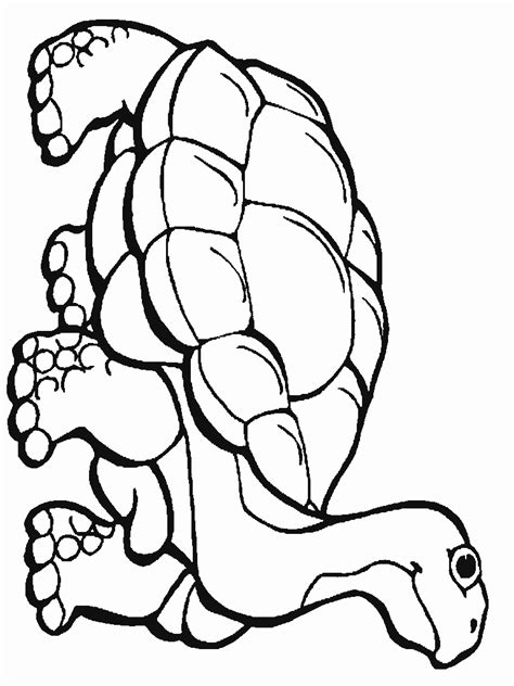 rain forest coloring pages   coloring sevierville tennessee