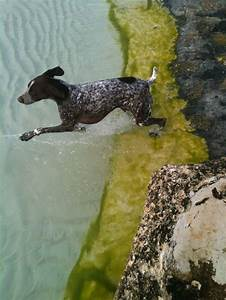 17 Best images about Hunting Dogs on Pinterest | Dog art ...