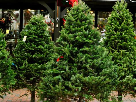where to buy a christmas tree around newton newton ma patch