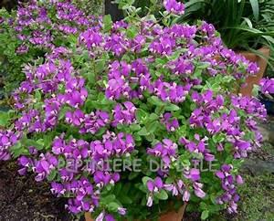 Arbustes Décoratifs à Fleurs : arbuste a fleur mauve arbre a fleur mauve maison ~ Premium-room.com Idées de Décoration