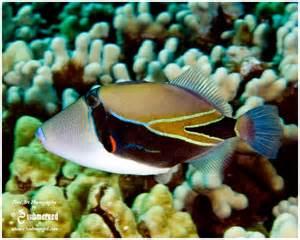 Hawaiian State Fish Name