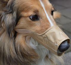 der richtige maulkorb fuer den hund mf tierblog