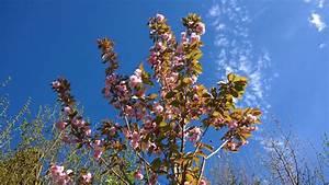 Aufbau Einer Kirschblüte : fast perfekt ist gut genug hat mich unmengen tr nen gekostet rezension ~ Frokenaadalensverden.com Haus und Dekorationen