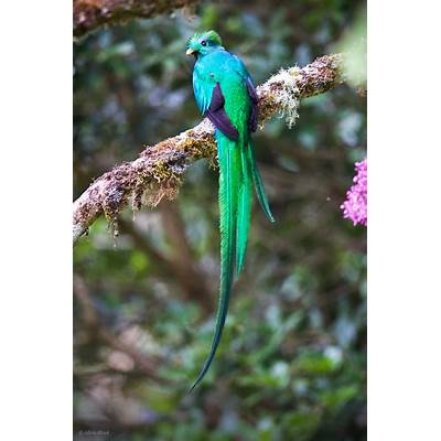 Feather Tailed Stories: Resplendent Quetzal
