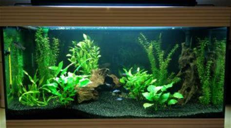 avis et meilleur choix de pompe interne pour aquarium de 50l