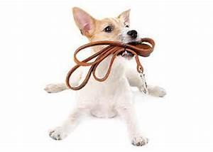 Neighborhood dog walker for Puppy dog walker