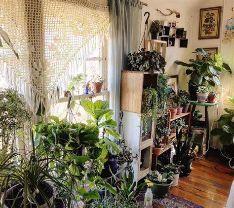 Best Images About Indoor Plants Pinterest