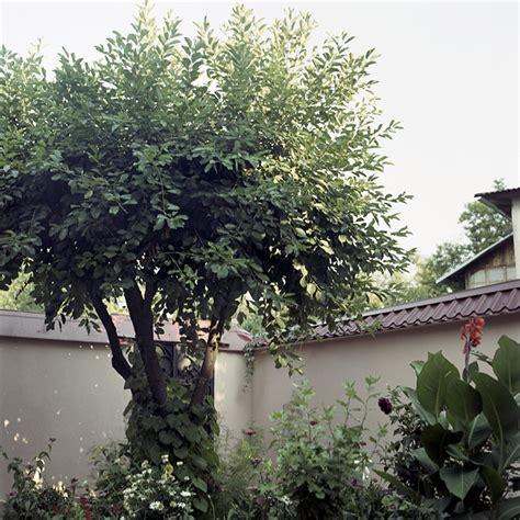 olive garden odessa tx smirnova memories of lost moments