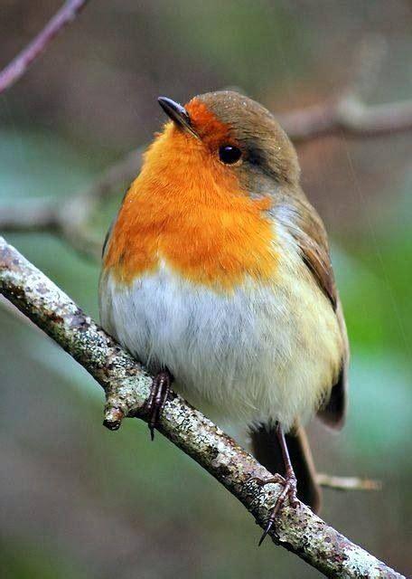 encouraging birds   winter garden powerscourt