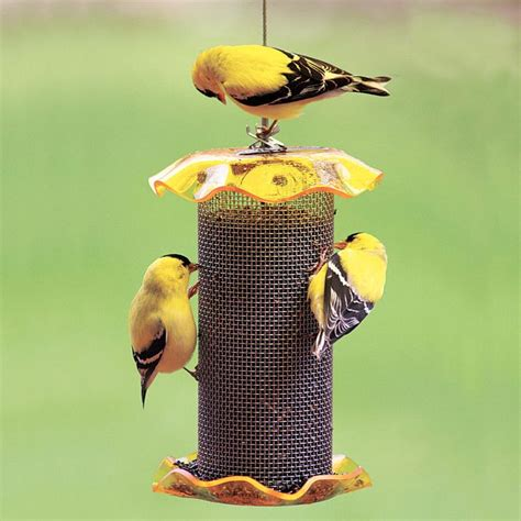 117 best images about feed birds squirrels on birds bird feeders and the birds