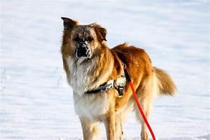 Welche Pflanzen Sind Für Hunde Giftig : mein hund im winter probleme von streusalz bis kalte temperaturen ~ Watch28wear.com Haus und Dekorationen