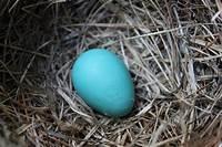 robin egg blue 52 FLEA: Robin's Egg Blue