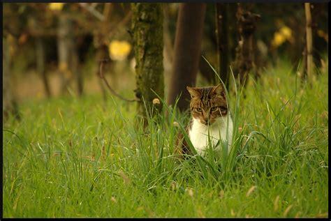 animale da cortile vita animale d autunno in cagna foto immagini