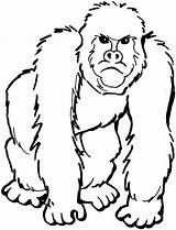 Gorilla Coloring Pages Angry Animals sketch template