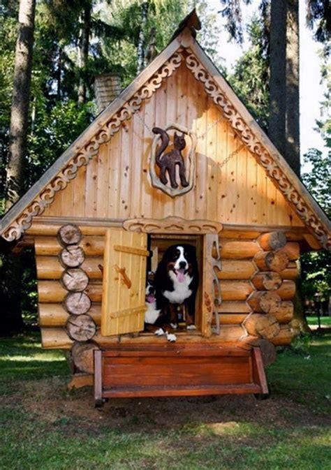 times    dog house   good